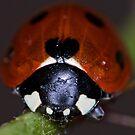 Face of a Ladybird by jskouros
