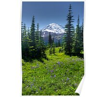 Trail to Dewey Lake - Mt. Rainier Natl. Park Poster