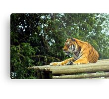 Sheer concentration Metal Print
