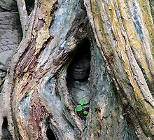 Ta Prohm Hidden Face - Angkor, Cambodia.  by Tiffany Lenoir
