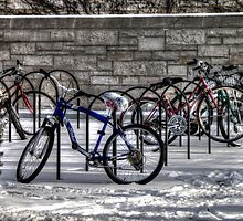 Bike Rack by Terence Russell