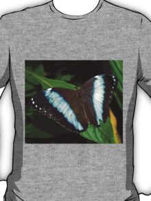 Blue Striped Butterfly T-Shirt