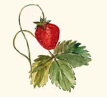 Strawberry by mugs-munny