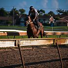 Gallop by David Petranker