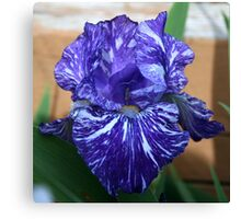 An Iris Close-Up Canvas Print