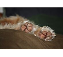 Paw Paw Photographic Print