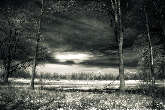 Storm Clouds At The Kitty Todd Nature Preserve  by MLabuda