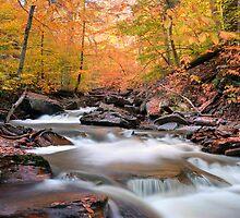 Glowing Fall Foliage Over Kitchen Creek by Gene Walls