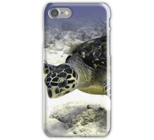 Caribbean Sea Turtle  iPhone Case/Skin