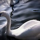 Swan song by gemynd