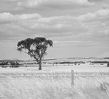 The Lonely Tree by liaimages