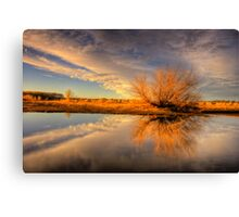 Tree Flares before Sunset Canvas Print