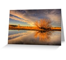 Tree Flares before Sunset Greeting Card
