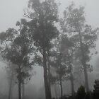 Gloomy Morning On Cradle Mountain, Tasmania by Trish Kinrade