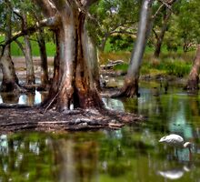 Spoonbill under the Gum Trees by Mark Richards