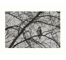 Hawk-After the Snow Storm Art Print