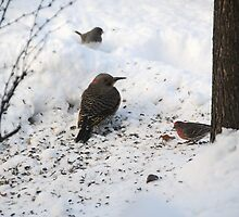 Northern Flicker and the Pink Bird by amyklein196203
