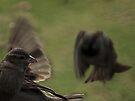 park sparrows by dennis william gaylor