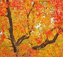 Autumn colors by Usman Bajwa