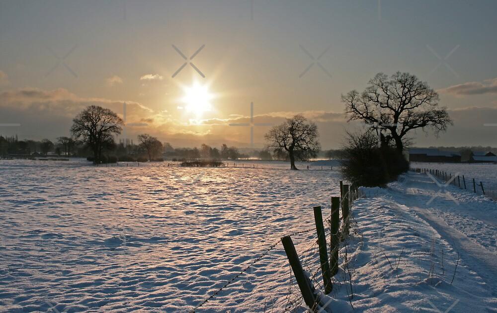 Snowy Sunrise by stellaozza