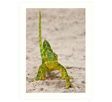 Flap-necked Chameleon (Chamaeleo dilepis) Art Print