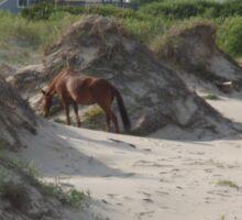 Horse on the beach - OBX Sticker
