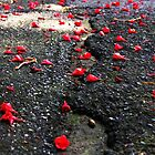 The Petals of Your Fallen Flowers. by happyChap