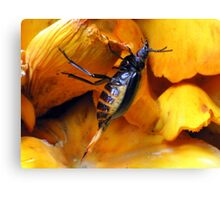 Beetle With Ovipositor Canvas Print