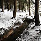 Winding Winter by Darren Buss