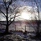Low sun on snowy fields by judith murphy