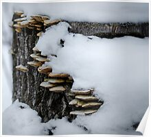 Snow, Fungii and a Stump Poster