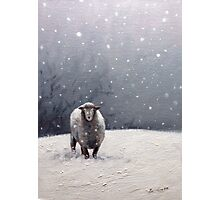 The Solitary sheep Photographic Print