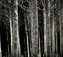 Celra in Winter by Howard CB Sayer