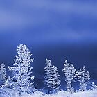 winter blues by sue shaw