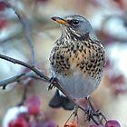 Birdzilla the Viking by Krys Bailey