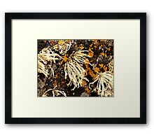 Seaweed And Rust...............................Most Products Framed Print