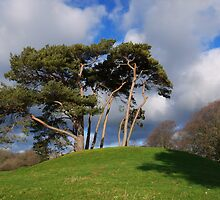 Winchelsea Trees by SAngell
