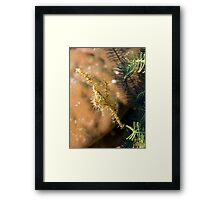 Camoflaged Framed Print