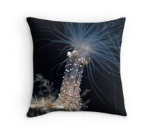 beauty at night Throw Pillow