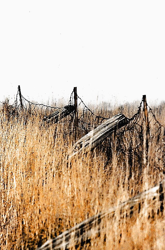 Old Fence - Swansea, Massacusetts by T.J. Martin