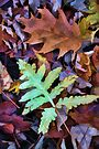 Leaves - Color and Pattern by T.J. Martin