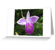 Purple Orchid Flower - Martinique, FWI Greeting Card