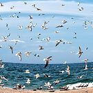 Seagulls by Caleb Ward