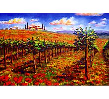 Tuscany Vineyard & Poppies Photographic Print