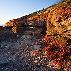 Crimson Rocks at Whisky Bay by Will Hore-Lacy