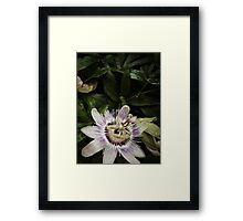 Open Passion Framed Print