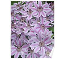 A Blanket of Clematis Poster