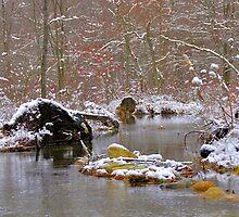 Winter Scene by dlwagner