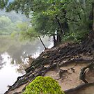 1522-XL-Chattahoochie Roots by George W Banks