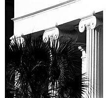 Hibernian Palmetto No. 2 Photographic Print